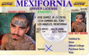 Sex: Mucho. Wt: Too much. Class: Illegal Alien. Entitled to: Drive, attend college, purchase guns, vote.