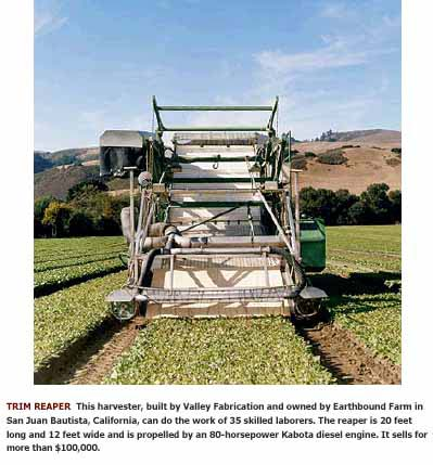 Automated salad greens picking machine